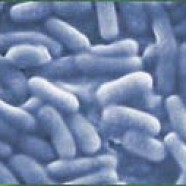 MRSA cases fall by a quarter at NNUH