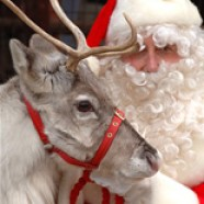 Reindeer, carols and cake – could only be one thing – Christmas