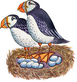 Jenny Lind puffins